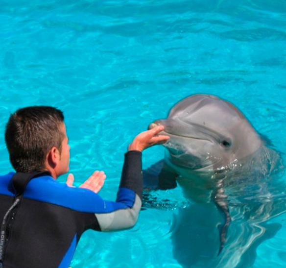 nadar con delfines en tarragona